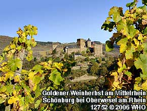 Golden wine autumn on the Middle Rhine River: Schonburg castle near Oberwesel on the Rhine River